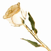 Gold Dipped Rose by 24K Rose